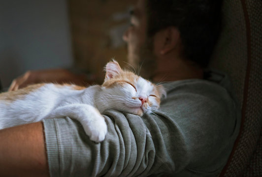 Cute smiling happy cat lying on the man's shoulder