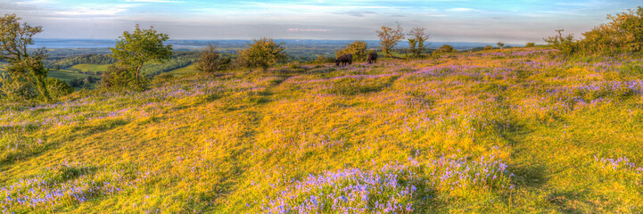 Quantock Hills Somerset with bluebells and wild ponies in colourful HDR panoramic view