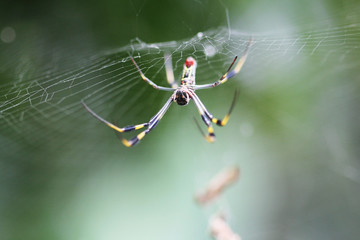 macro of tropical spider in web