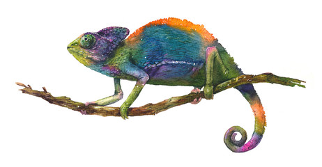 Watercolor realistic illustration of multicolored chameleon, tropical lizard on white background