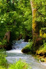 Fresh clean mountain water, wild mountain stream