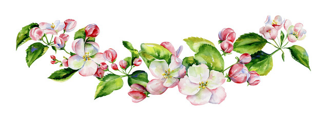 A blooming branch of apple tree in spring watercolor. Hand drawn apple tree branches and flowers .Perfect for invitations and wedding cards.