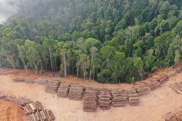 Logging. Aerial drone view of deforestation environmental problem in Malaysia