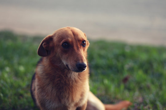 portrait of a stray affectionate dog