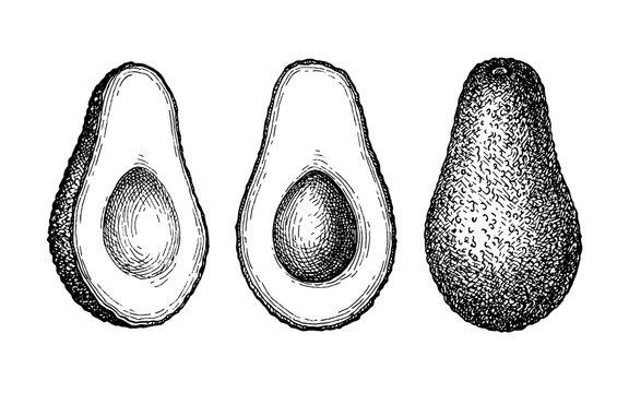 Ink sketch of avocado.