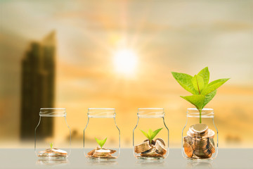 Coin in the bottle and plant growing with savings money on photo blur cityscape on sunlight background, Business investment and saving money concept.