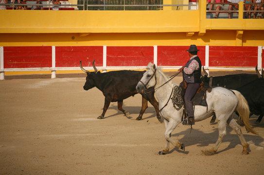 Féria du cheval aux Saintes-Maries-de-la-Mer