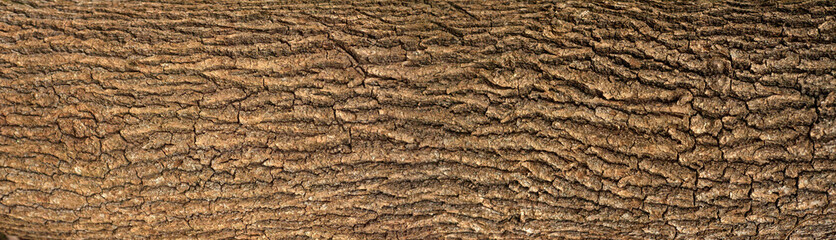 Embossed texture of the bark of oak with green moss. Panoramic photo of the oak texture. Fototapete