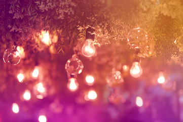 Stylish toned photo of string lights hanging on tree in the garden at evening time