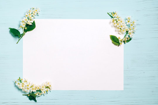 Bird cherry blossom branch on white and wooden background.