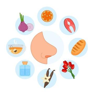 5 sense organs. Smell. Vector illustration.