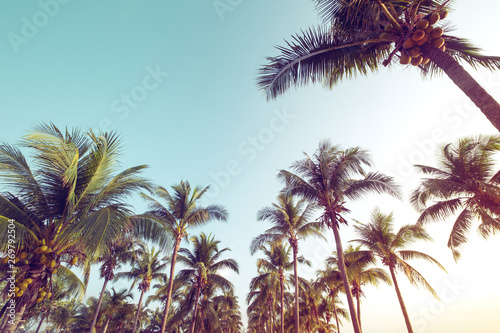 Vintage nature background - coconut palm tree on tropical beach blue