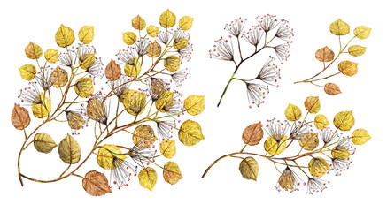 Watercolor illustration. Botanical collection.  Set: yellow leaves, branches and other natural elements. All drawings isolated on white background. Indian summer..