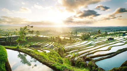 Foto auf Gartenposter Beige Beautiful sunrise over the Jatiluwih Rice Terraces in Bali, Indonesia.