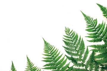 Summer composition. Tropical fern leaves on white background. Summer concept. Flat lay, top view, copy space