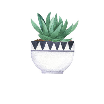 Green fresh houseplant in a white pot isolated on white background. Hand drawn watercolor illustration