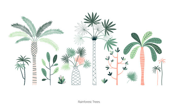 Rainforest trees hand drawn vector illustrations set. Exotic green tropic forest. Tropical plants. Botanical hawaii nature. Jungle landscape t shirt prints, poster design elements