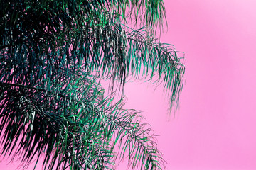 Abstract image of palm tree with retro pastel tones