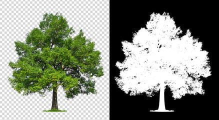 single tree on transparent with clipping path Fototapete