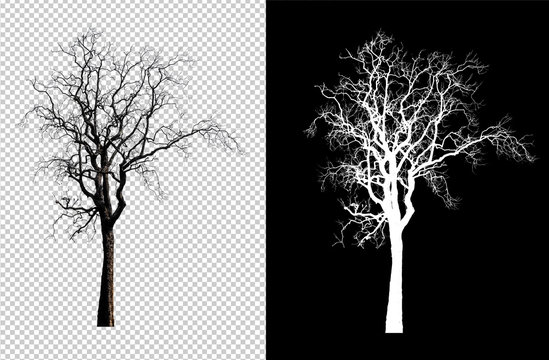 single tree without leaf with clipping path