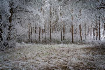 Mit Raureif überzogene Wald, mit einer kleinen Lichtung