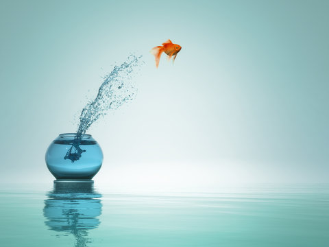 Goldfish jump to the sea