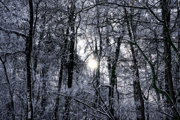 Schwarzweiß Aufnahme - Winterlicher Wald