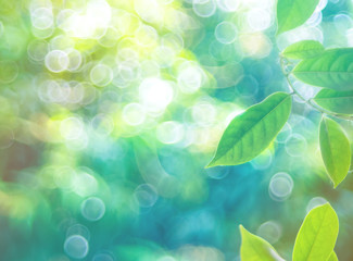 Soft focus of green leaf with bokeh from defocus background. Wall mural