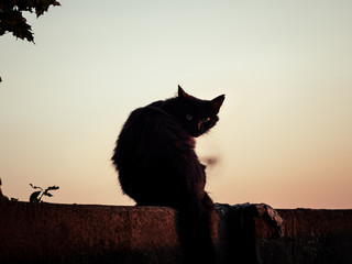 Image of black silhouette of a cat sitting on a wall