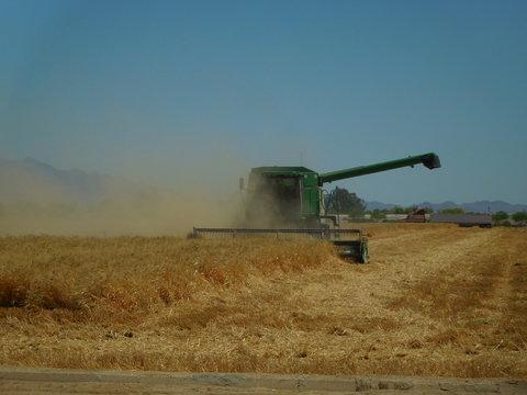 Arizona wheat harvesting