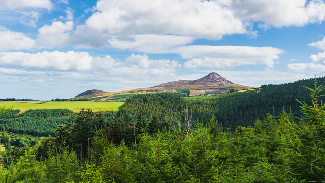 Scenic Irish fir tree forest landscape. Great Sugar Loaf peak, in Wicklow Mountains, Ireland, as seen from Crone Woods.