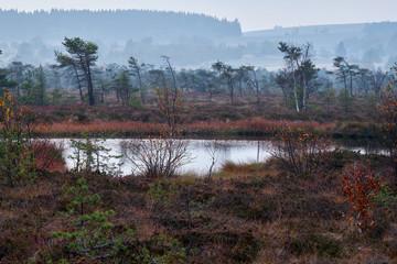 """NSG """"Schwarzes Moor"""", Biosphärenreservat Rhön, Unterfranken, Franken, Bayern, Deutschland."""