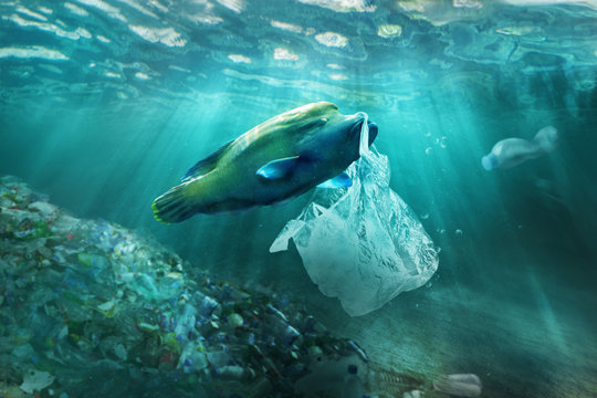Plastic pollution in ocean environmental problem. Fish can eat plastic bags.