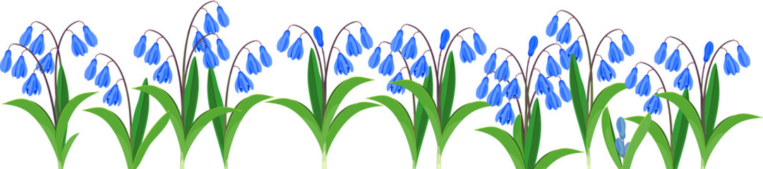 Wall Mural - Spring flower border with blue flowering Siberian squill or Scilla siberica isolated on white background