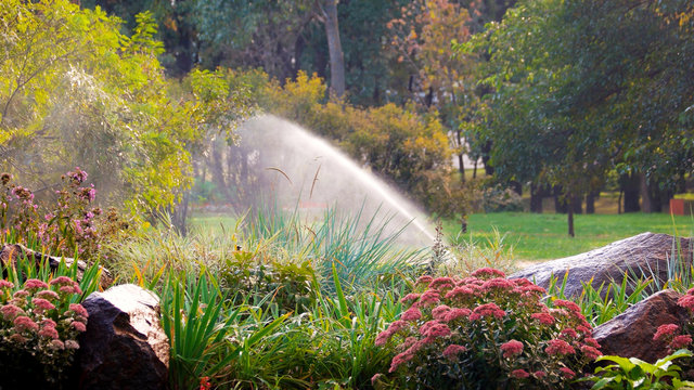 Blooming flowers in summer park. Water sprinkler in a garden pouring flowers. Spring landscape.