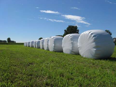 sheaves of hay packed