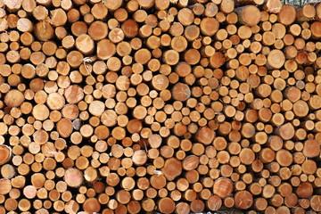 Aluminium Prints Rondin de bois coupé