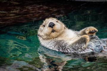 sea otter, Lisboa, March 2019
