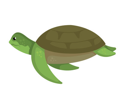 turtle animal nature icon vector illustration