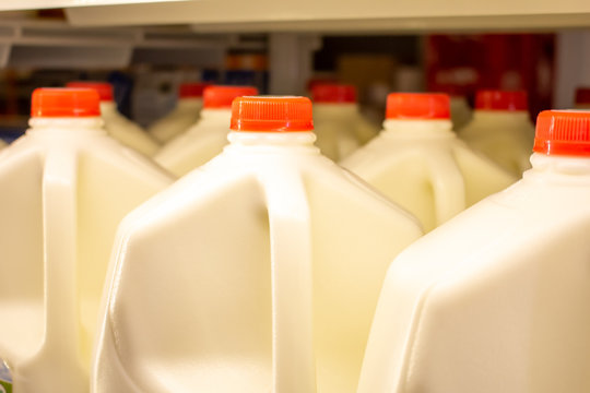 Several gallons of milk in the refrigerator