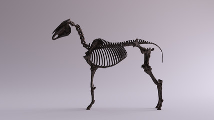 Black Iron Horse Skeletal System Anatomical Model Left View 3d illustration 3d render