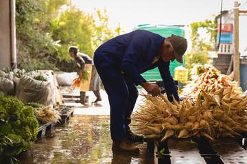 Senior farmer arranging harvested radish in market