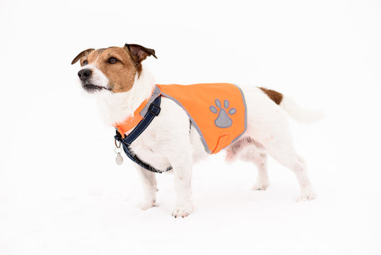 Dog wearing pet safety reflective vest standing on white snow