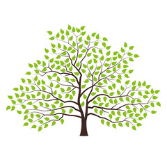 Tree with green foliage. Landscape design, nature, forest of garden symbol. Vector illustration.