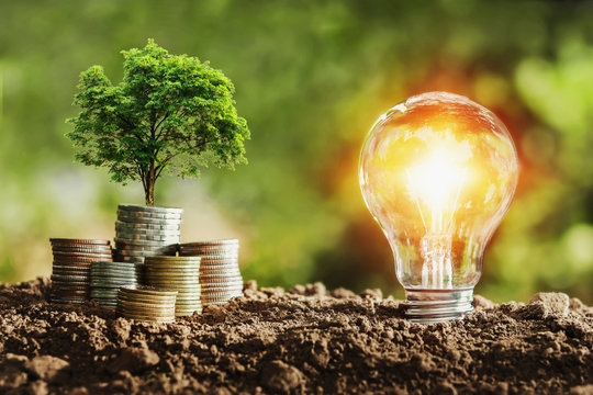 tree growing on coins and light bulb. concept saving money with energy