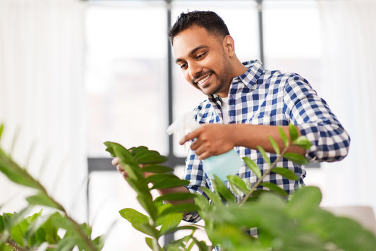 people, housework and care concept - indian man spraying houseplant by water sprayer at home