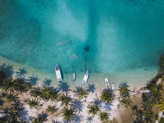 paradise tropical beach with turquoise sea water and palm trees, aerial drone top view beautiful...