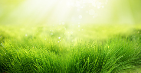 Fototapete - Natural green background of young juicy grass in sunlight with beautiful bokeh. Lush grass close-up in nature outdoors, wide format with copy space.