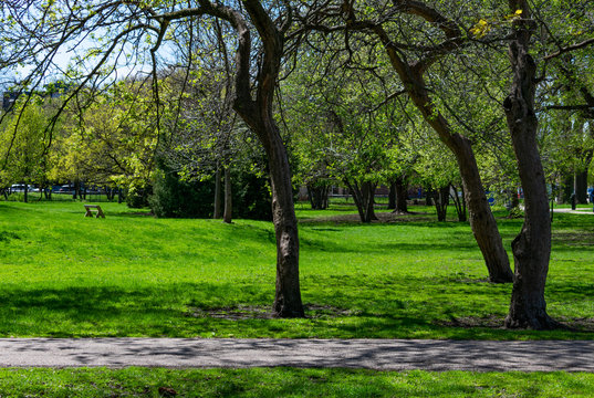 Green Grass and Trees at Welles Park in Lincoln Square Chicago