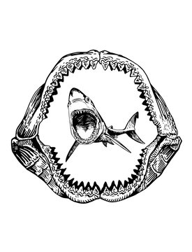 Graphical shark in megalodon jaw isolated on white backgrond,vector sea-food illustration